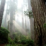 redwood-national-park